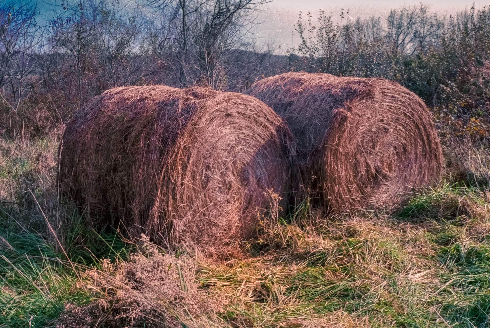 Haystacks, shot on Fuji C200
