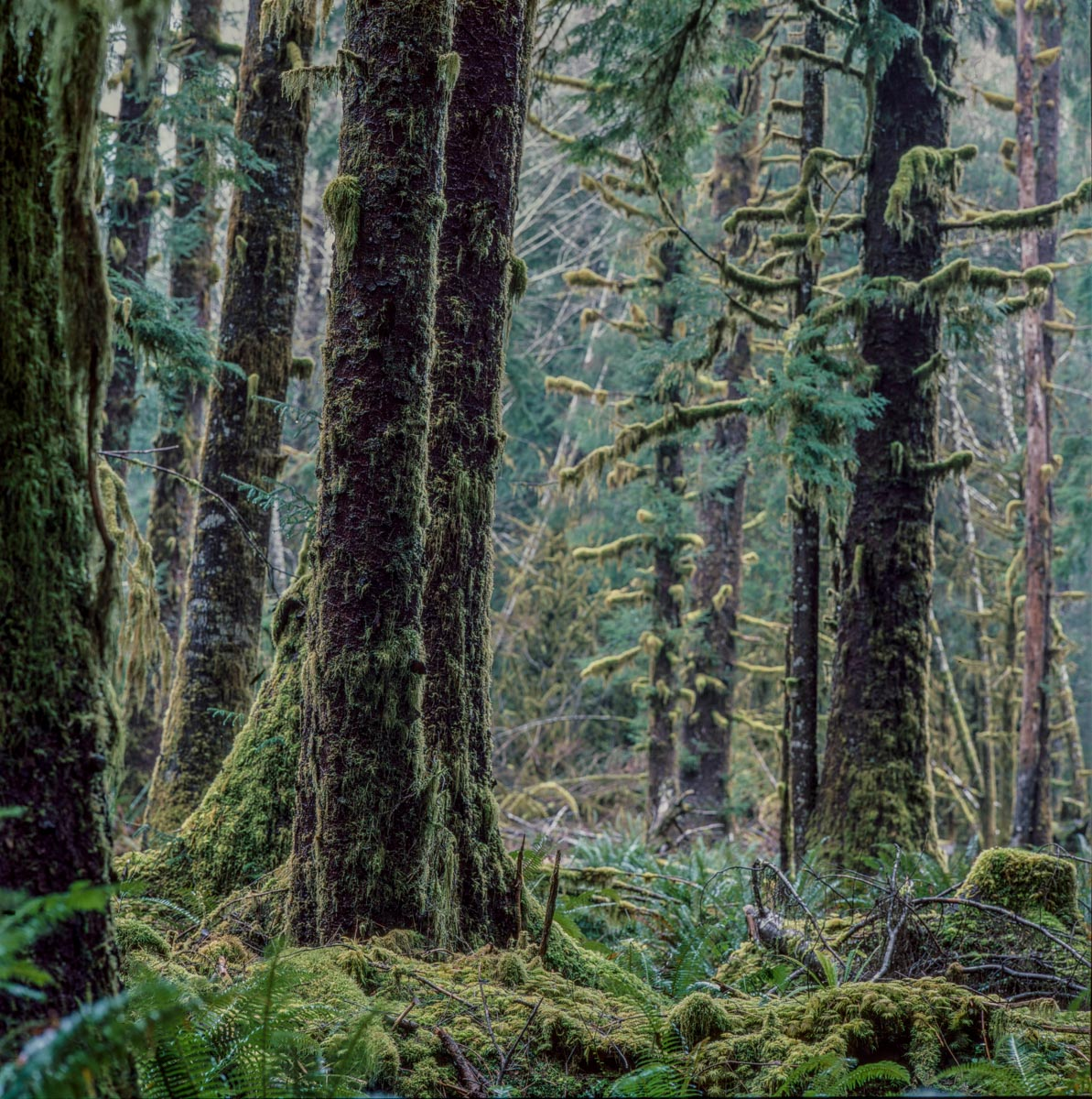 Verdent trees at Crescent Lake in Washington